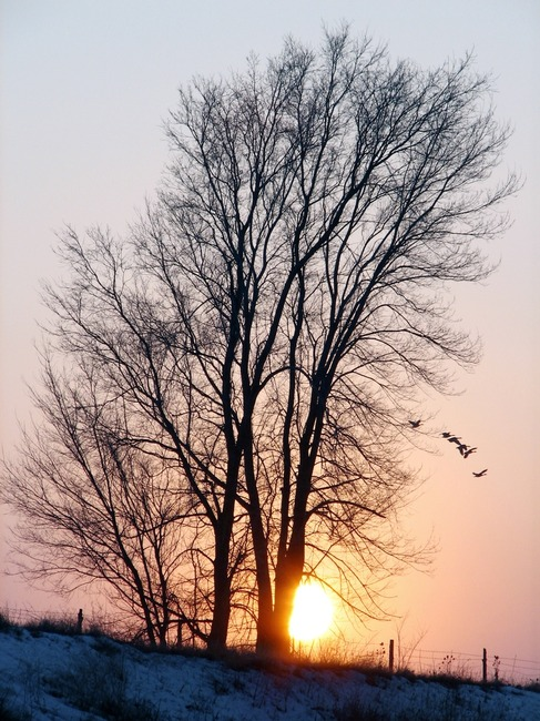 Tree and Sunset